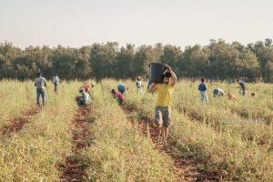 Una scena di lavoro nei campi di SfruttaZero nel 2017. Foto di Alessandro Bollino per Diritti a Sud.