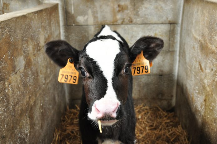 l'industria della carne e dei derivati animali è una delle principali cause di emissioni di gas serra nel mondo